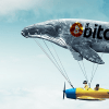 65%の価格下落でビットコイン富豪者達が更に多くのBTCを獲得