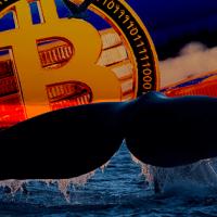 ビットコインのスケーリング能力の進展:「クジラ」が48000BTC移動・手数料はたったの4円相当