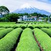 日本茶の産地偽装を受け、信頼性やトレーサビリティ向上に向けVeChain技術の概念実証を実施