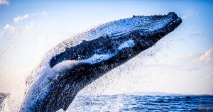 ビットコインクジラの再活発化を指摘 仮想通貨分析機関Filpside Cryptoが報告