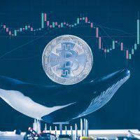仮想通貨バブルは一匹のクジラ説でテザー社が公式声明 「価格操作のUSDT利用はない」
