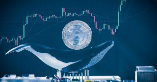 仮想通貨BTCバブルのクジラ説を否定 ロングハッシュが独自分析