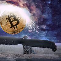 1000BTCを超えるビットコインクジラのウォレットが増加 チャートとの相関は?