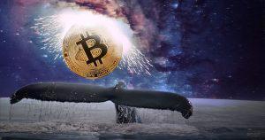 仮想通貨ビットコイン急落の背景に「クジラ」観測、25000BTCの大移動で13億の利益か