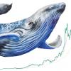 ビットコイン100万円割れ回避で急反発 仮想通貨クジラの競争激化を指摘する見方も