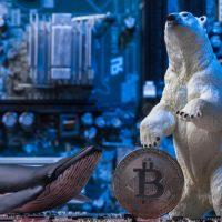 中国仮想通貨マイナーが語る「ビットコインの相場観」 2020年の半減期と相場の注目点
