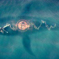 企業のビットコイン巨額購入、どう行われた?──米Coinbaseが明かす取引手法
